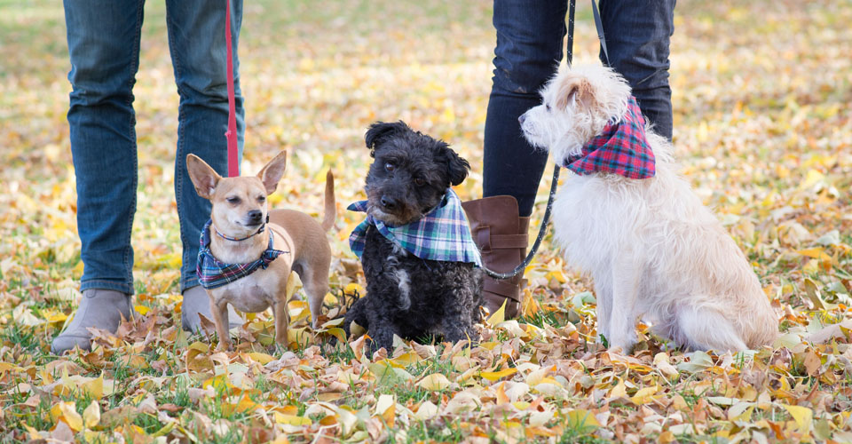 pet photographer in Ft. Collins, CO