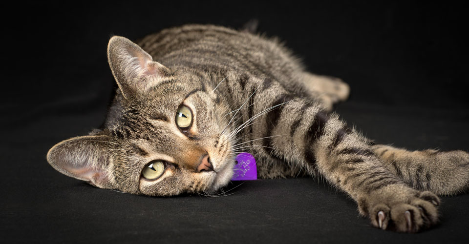 animal rescue photography