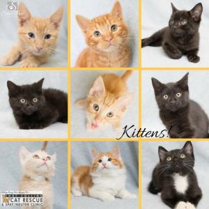 Adoptable Kittens