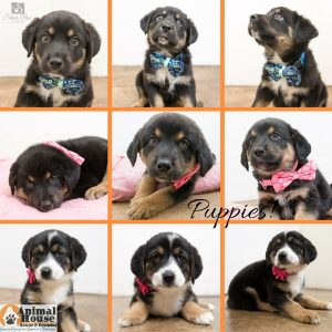 Adoptable Puppies