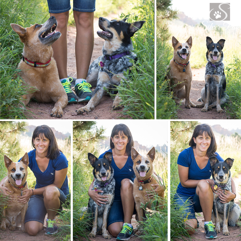 Cattle Dogs at Horsetooth Blog 2 Silver Paw Studio