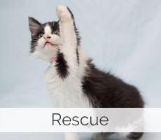 animal rescue Fort Collins