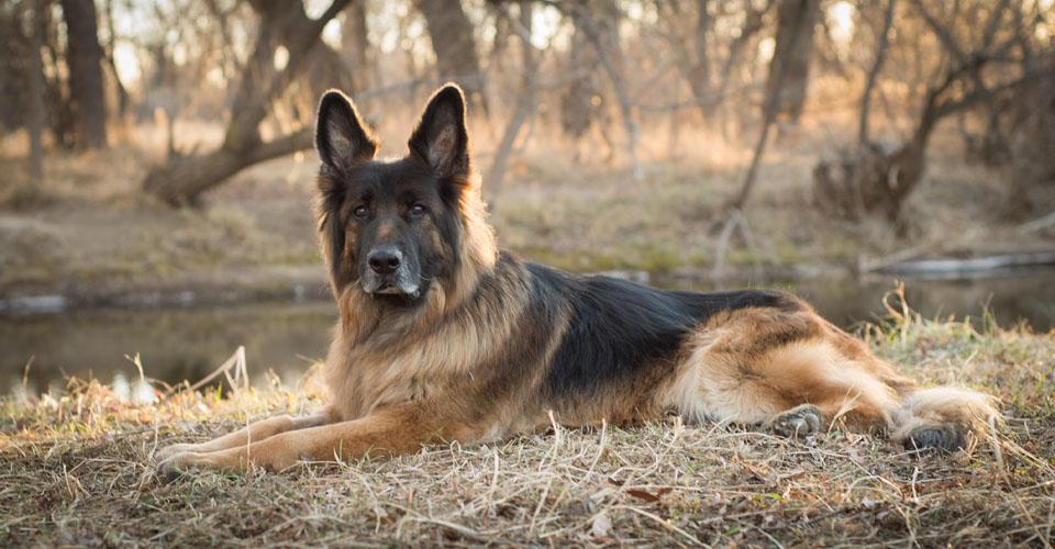 dog photography in Colorado