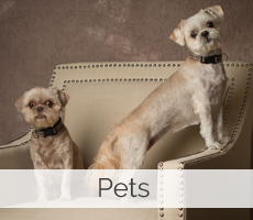 Fort Collins, Colorado pet photographer