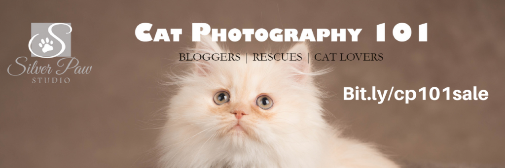 Cat Photography 101 Sale