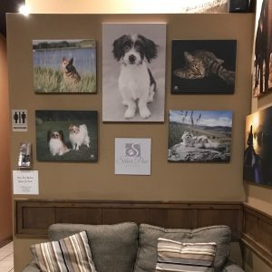 Silver Paw Studio Display